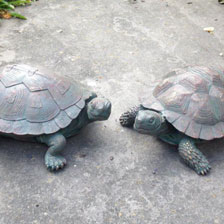 Mrs. and Mr. Tortoise